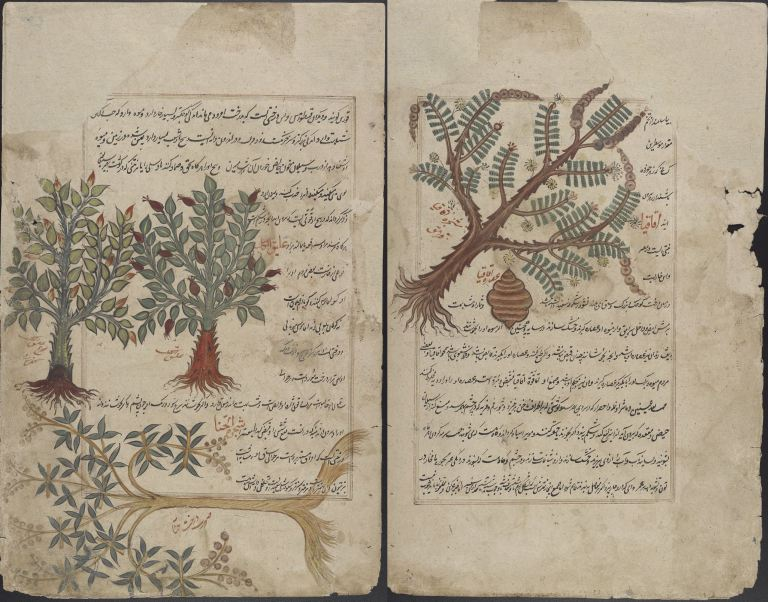 Persian_Translation_of_Dioscorides_Pedanius_of_Anazarbos