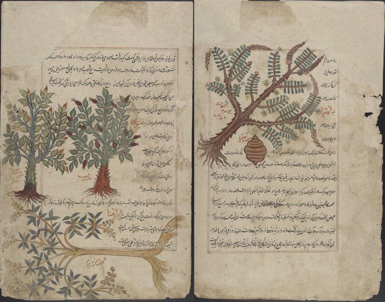 Persian_Translation_of_Dioscorides_Pedanius_of_Anazarbos